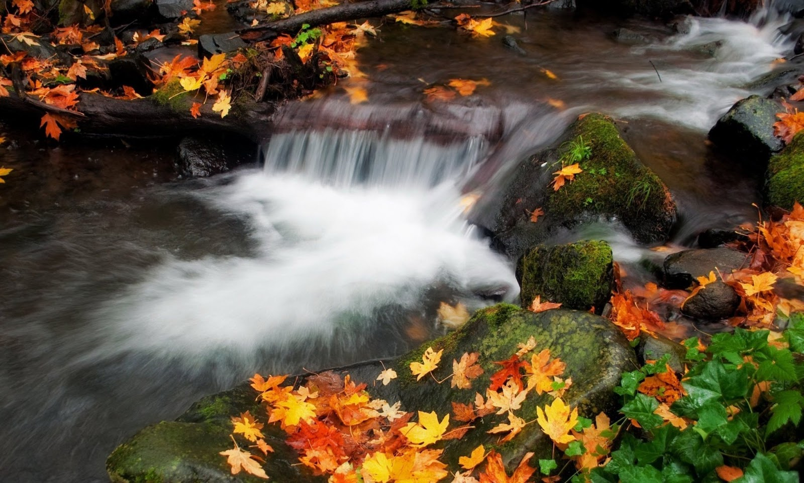 AMAZING NATURE HD WALLPAPERS 1080p ~ Hd Wallpapery